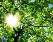Crone of the tree and sun — Stock Photo