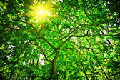 Crone of the tree with sun — Stock Photo
