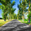 Road in avenue — Stock Photo #5086398