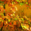 Small autumn oak tree - Stock Photo