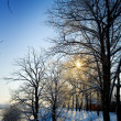 Winter view — Stockfoto