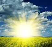 Sunrise on a wheaten field — Stock Photo