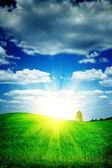 Sunrise on a green field — Stock Photo