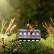 Stock Photo: Ants play music on microchip, fairytale
