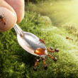 Human feeding ants - Stock Photo