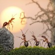 Team of ants, council, collective decision - Stock Photo