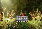 Ants play music on microchip, fairytale — Stock Photo