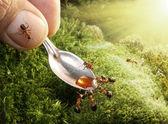 Human feeding ants — Стоковое фото