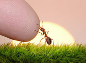 Human, nature and ant - finger of friendship — Stock Photo