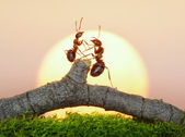 Two ants on sunset — Stock Photo