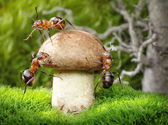 Team of ants mushrooming — Stock Photo