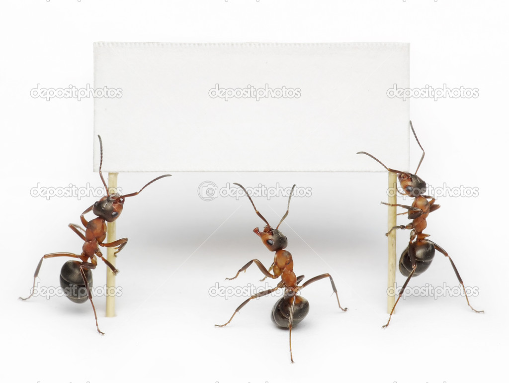 Team of ants hoding blank, placard or advertising billboard — Stock fotografie #4890995