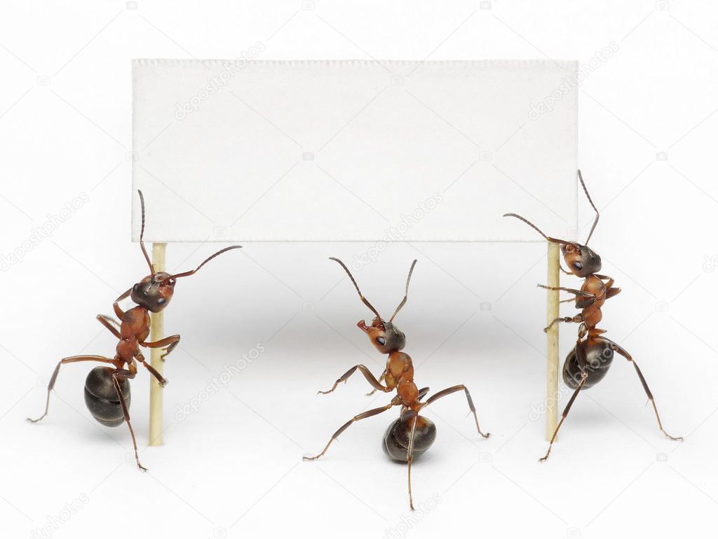 Team of ants hoding blank, placard or advertising billboard — Stok fotoğraf #4890995