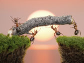 Team of ants constructing bridge over water on sunrise — Stock Photo