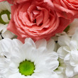 Stock Photo: Red and white flowers - roses and chrysanthemums