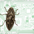 Computer bug — Stock Photo #4103474