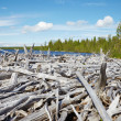 Stock Photo: Old dead wood on shore of Lake