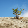 Tree among mountainous rocky plains — Stock Photo