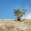 Tree among mountainous rocky plains — Stock Photo