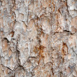 Seamless texture -  bark of pine - Stock Photo