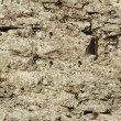 Seamless texture - natural stone — Stock Photo