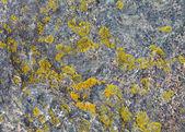Natuursteen met patches van korstmossen — Stockfoto