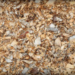 Waste of woodworking manufacture - sawdust background - Stock Photo