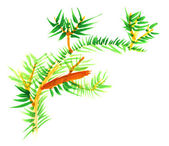 Primitive children's drawing - fur-tree branch — Stock Photo