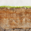Clay soil with cracks and green grass — Stock Photo