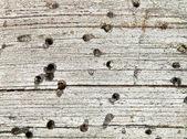 Background - rotten wood — Stock Photo