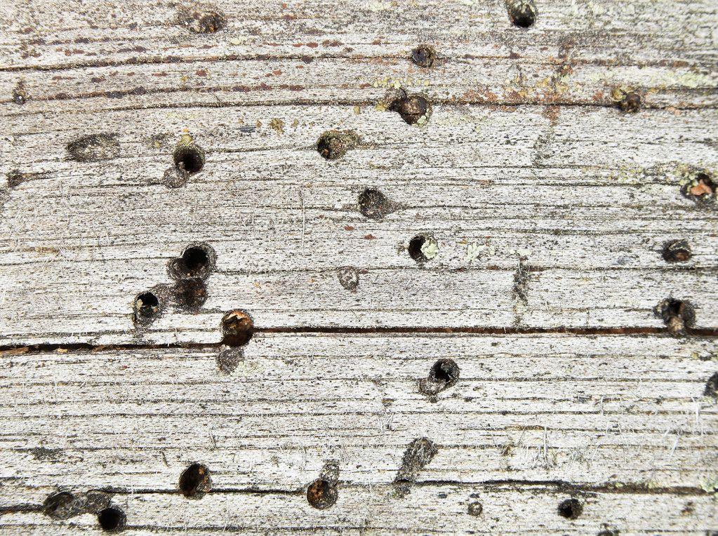 背景-烂木头