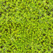 Seamless texture - marsh moss — Stock Photo