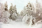 雪在寒冷的北方森林 — 图库照片
