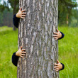 Humorous collage - man climbs up a tree — Stock Photo