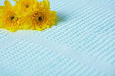 Contrasting composition - yellow flowers on blue background — Stock Photo
