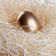 Gold egg in  nest — Stock Photo