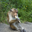 Monkey — Stock Photo #5309133