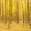 Autumn forest - Stock fotografie
