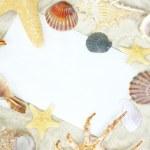 Shells on postcard — Stock Photo #3977272