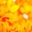 Autumn leaves — Stock Photo #4003306
