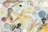 Starfish and shells — 图库照片