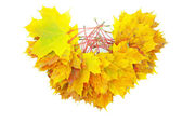 Maple leafs — Fotografia Stock