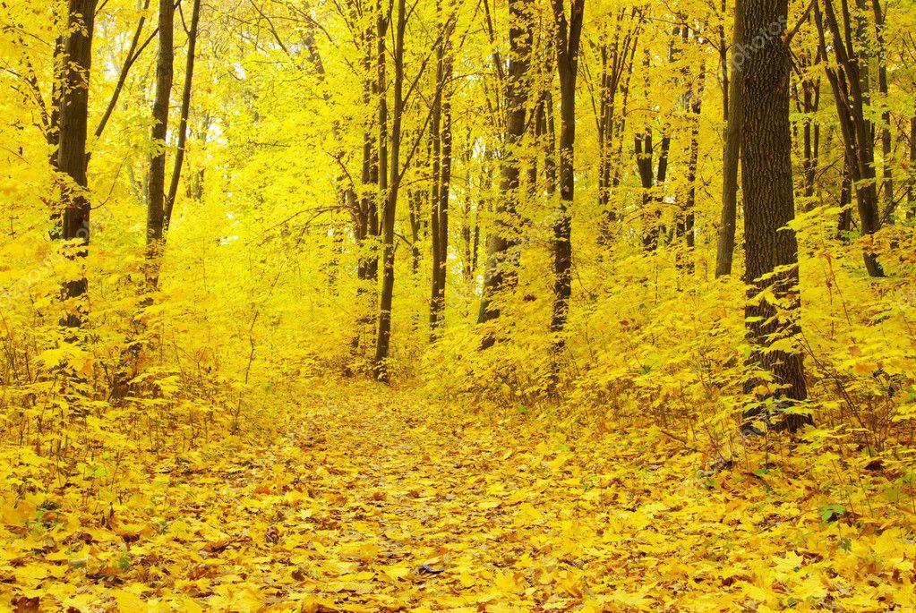 清晨的阳光,在秋天的树林– 图库图片