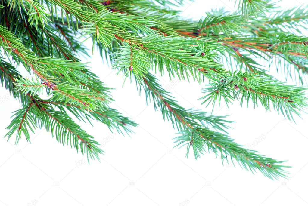 Fir tree branches christmas decoration on white — Stock Photo #4159084