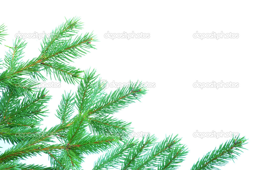 Fir tree branches christmas decoration on white — Stock Photo #4159087