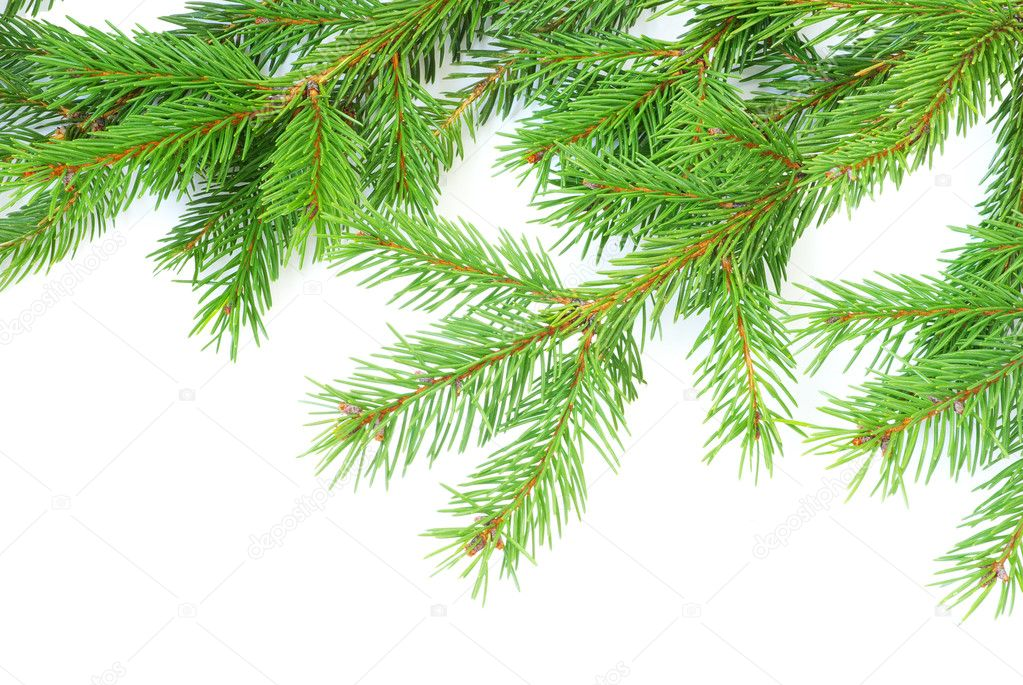 Fir tree branches christmas decoration on white — Stock Photo #4159119