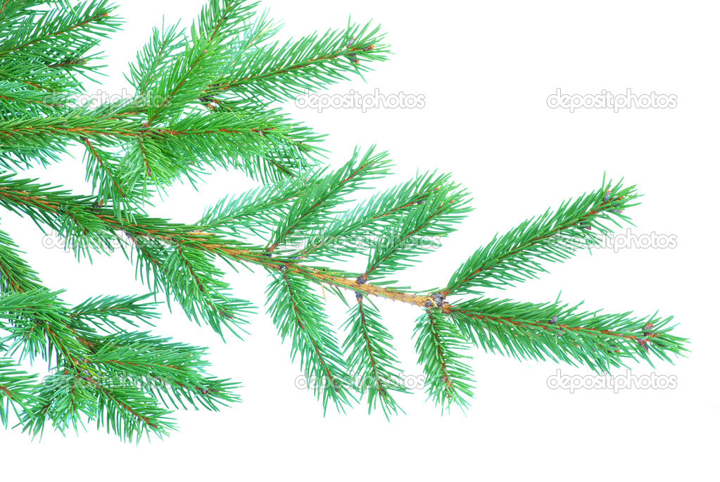 Fir tree branches christmas decoration on white — Stock Photo #4227990