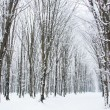Winter forest — Stock Photo #4617574