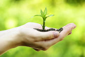 Plant in hands — Stockfoto