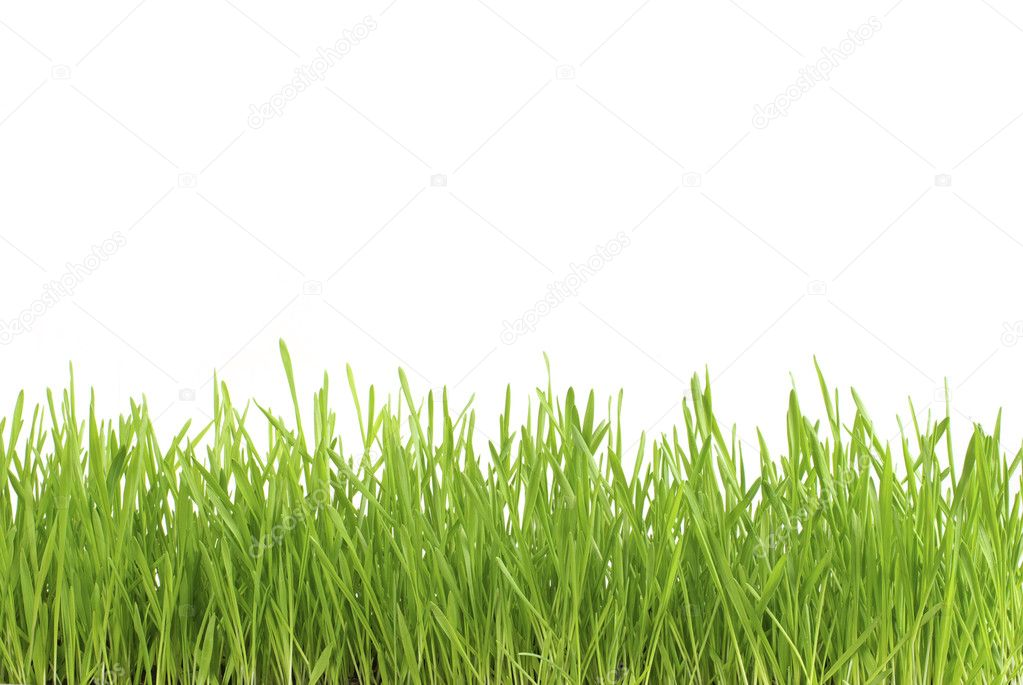 Green lawn isolated on white background  Stock Photo #4710987